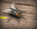 The Fly by MarcoHeisler
