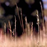 In The Field Pt. II