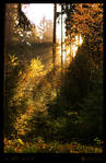 in the wood II