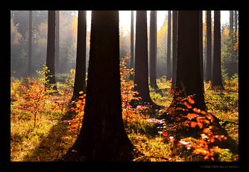 In The Wood III by MarcoHeisler