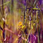 The Fields Of Color IV