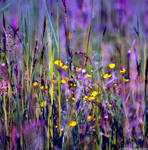 The Fields Of Color V