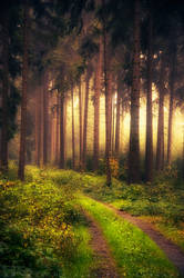 The Lost Path by MarcoHeisler
