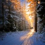 Lighten My Way by MarcoHeisler