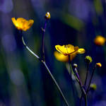 Yellow Nights by MarcoHeisler