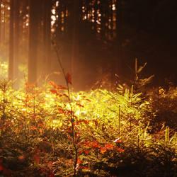 October Magic by MarcoHeisler