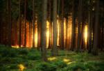 Backlit Forest