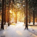 Winter Poem by MarcoHeisler