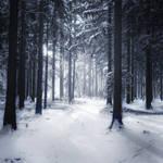 Winter Poem II
