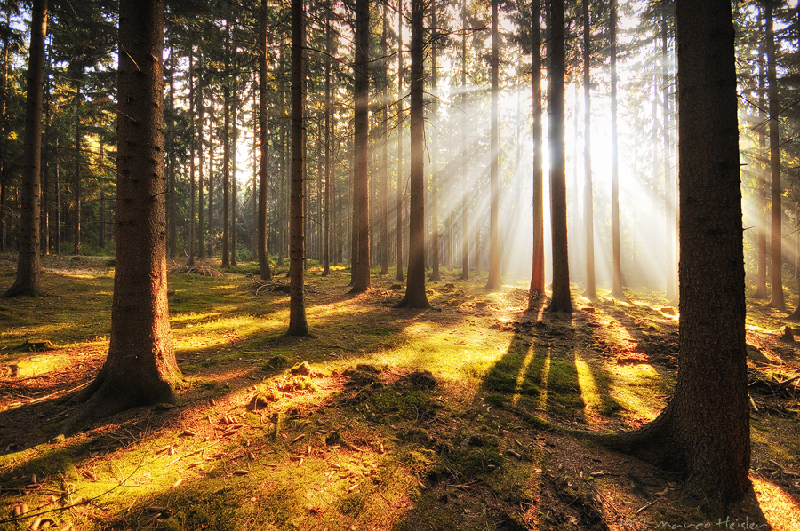 The Light Beyond
