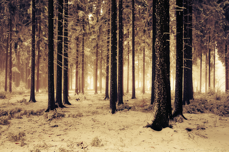 Enlightened Forest by MarcoHeisler