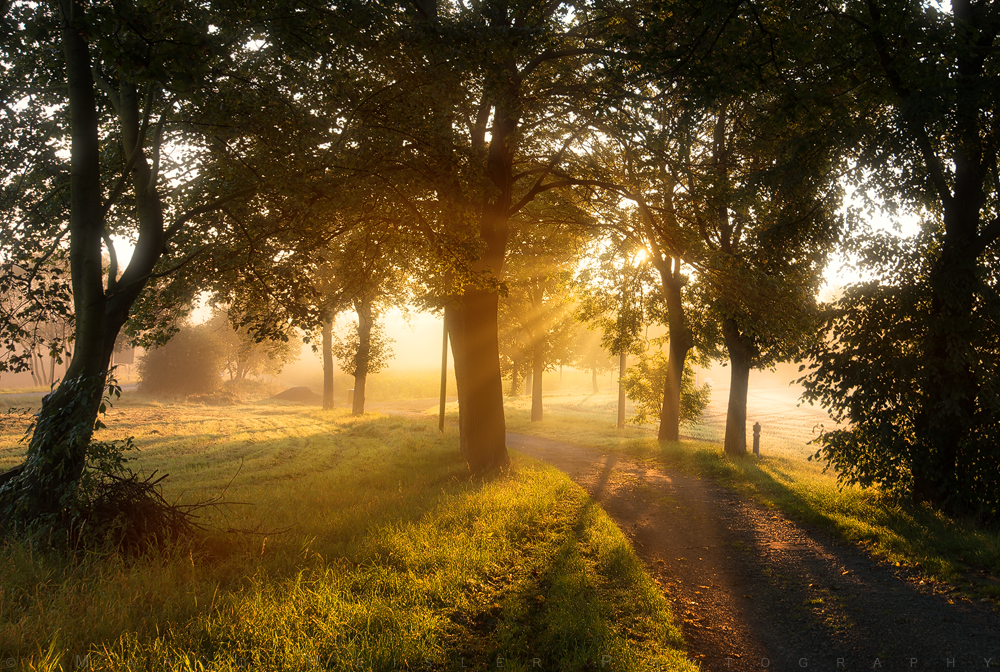 Morning Path by MarcoHeisler