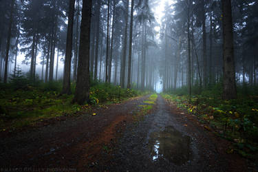The Dark Forest by MarcoHeisler