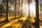 Revelation Of Light