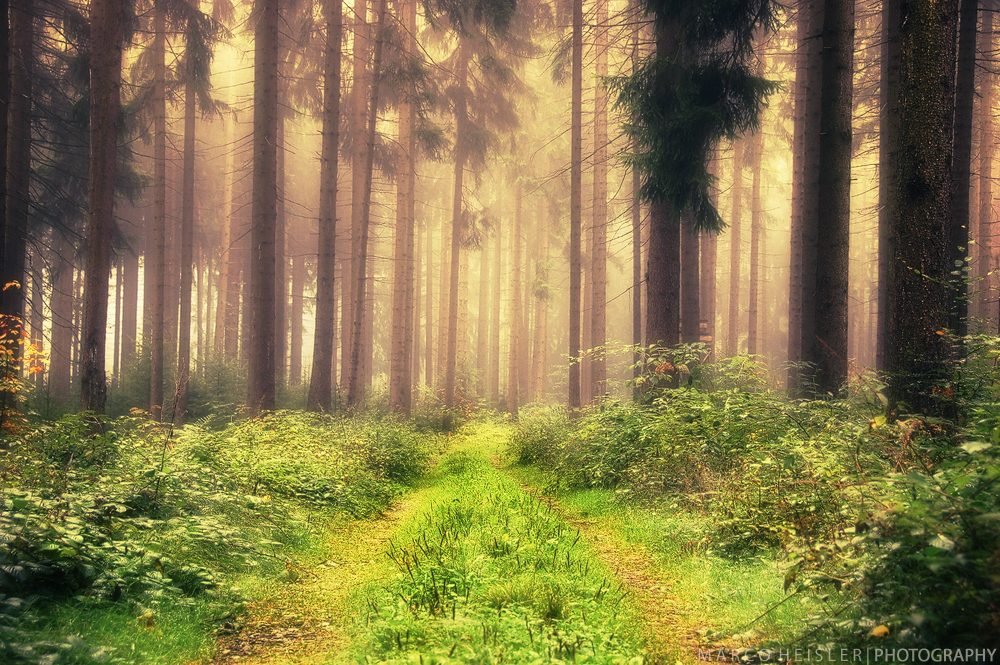 Painting The Forest by MarcoHeisler