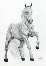 Horse 4 by wiwerga
