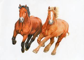 Konie by wiwerga
