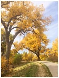Colorado Yellow