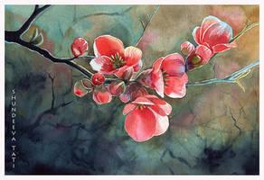 Blossom... by Takir