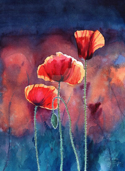 Poppy... by Takir