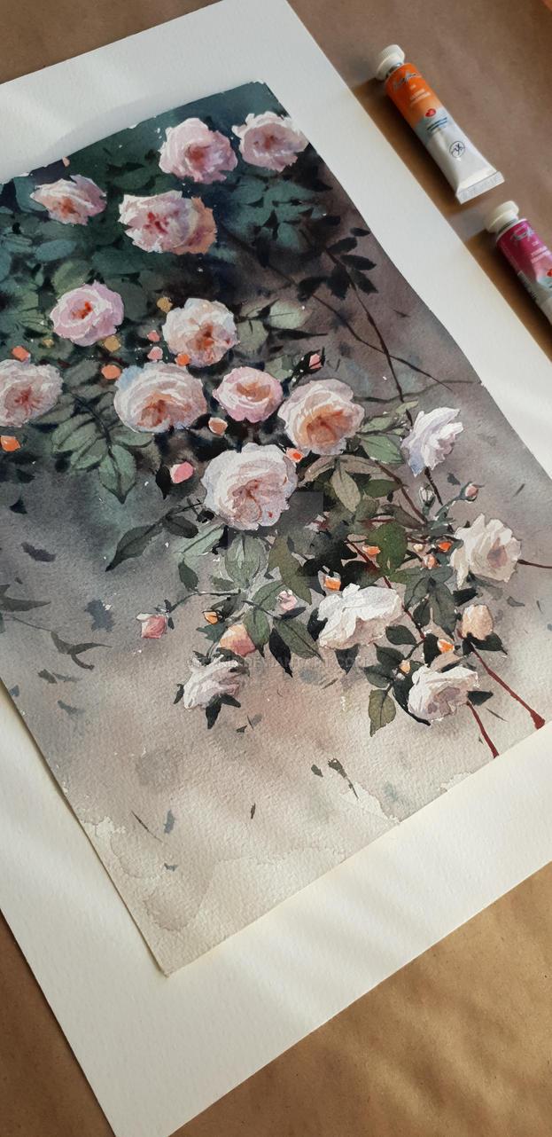 Roses by Takir
