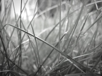 Colorlessgrass by drphilxr