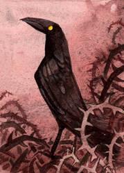 Rabe I Kakao Karte / Raven I ACEO Card by gabrieldevue