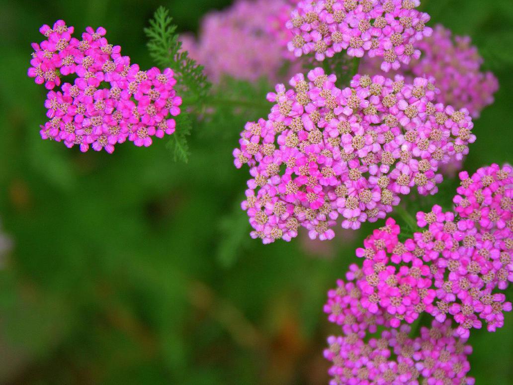teensy weensy little flowers by metpin777 on deviantART