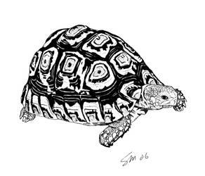 Leopard Tortoise by Hothead0001