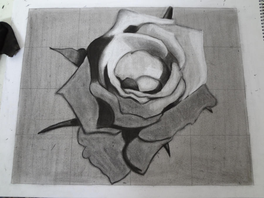 A rose in progress