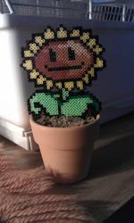 plant beads