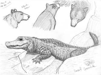 05/10/19 - Black Bear, Dwarf Crocodile - MN Zoo