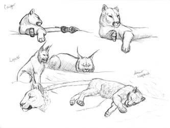 06/01/19 - Cougar, Lynx, Amur Leopard - MN Zoo