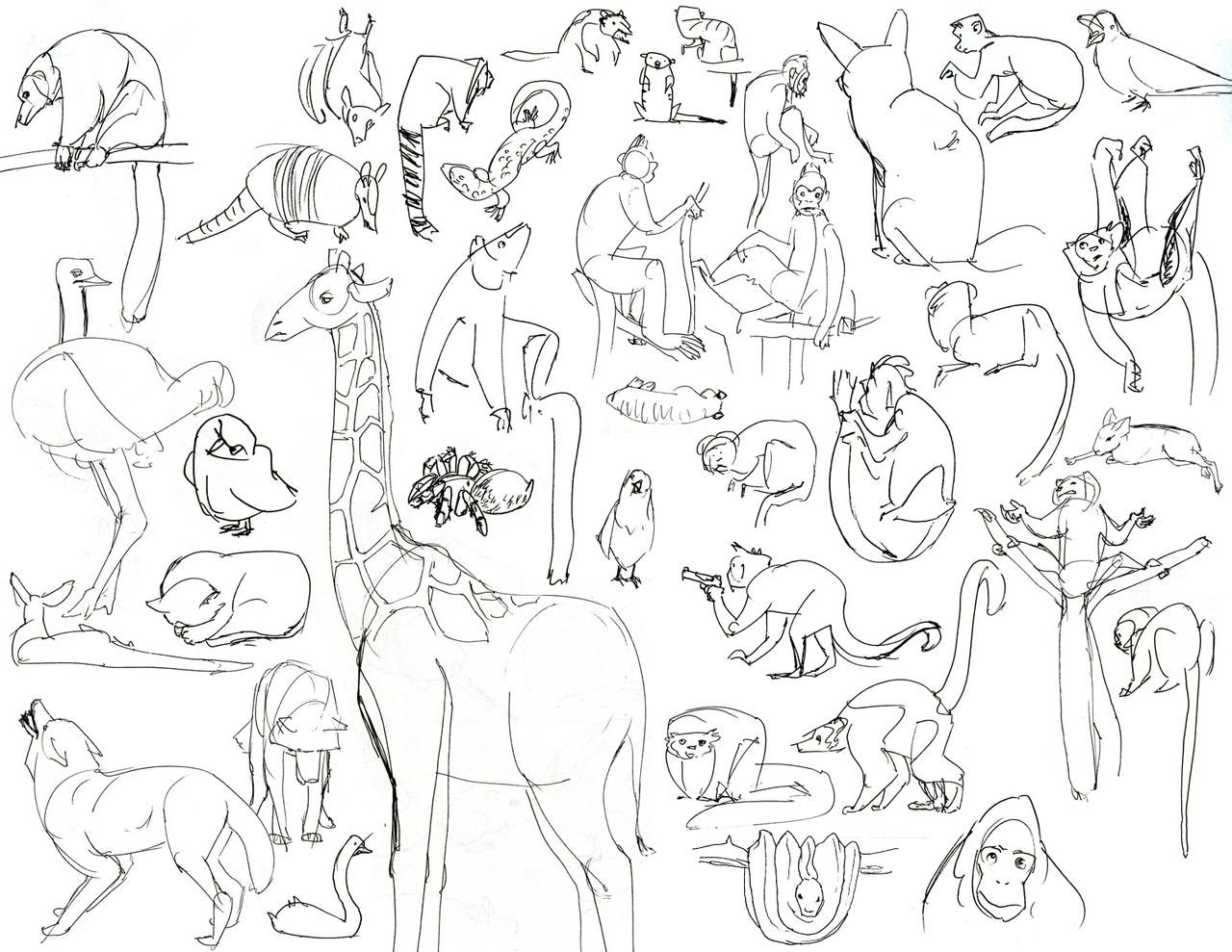 Zoo Sketches by HyraxAttax
