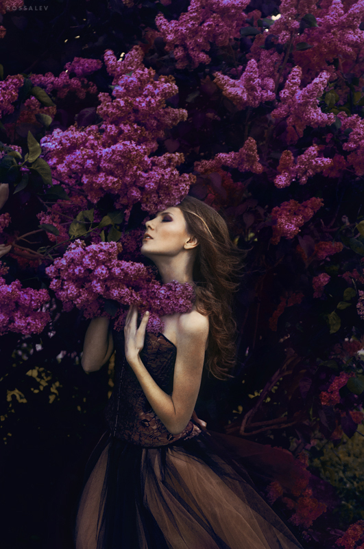 Lilac*