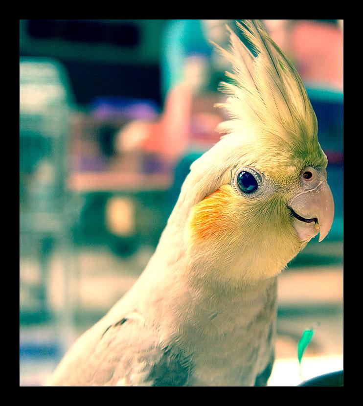 Parrot Baby by geckokid