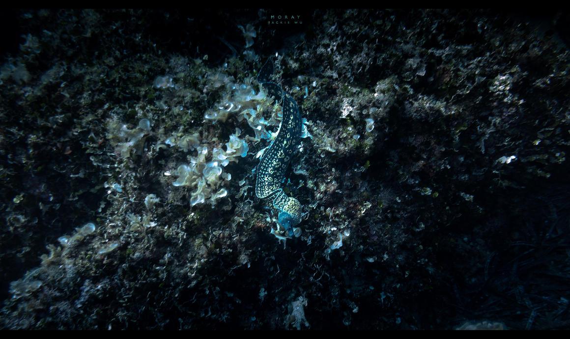 Eel by geckokid