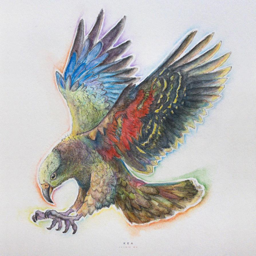 Kea by geckokid