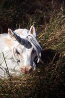 Tila the White Unicorn 2 by RRedolfi