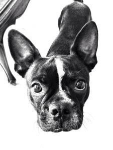 mac86mx's Profile Picture