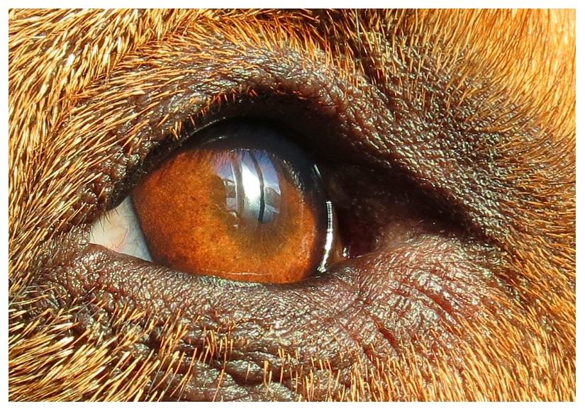 Eye by RueTris