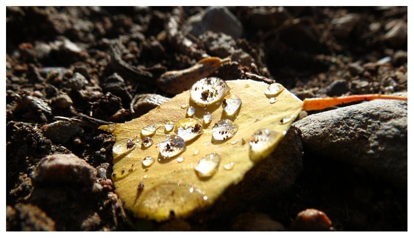 Leaf by RueTris