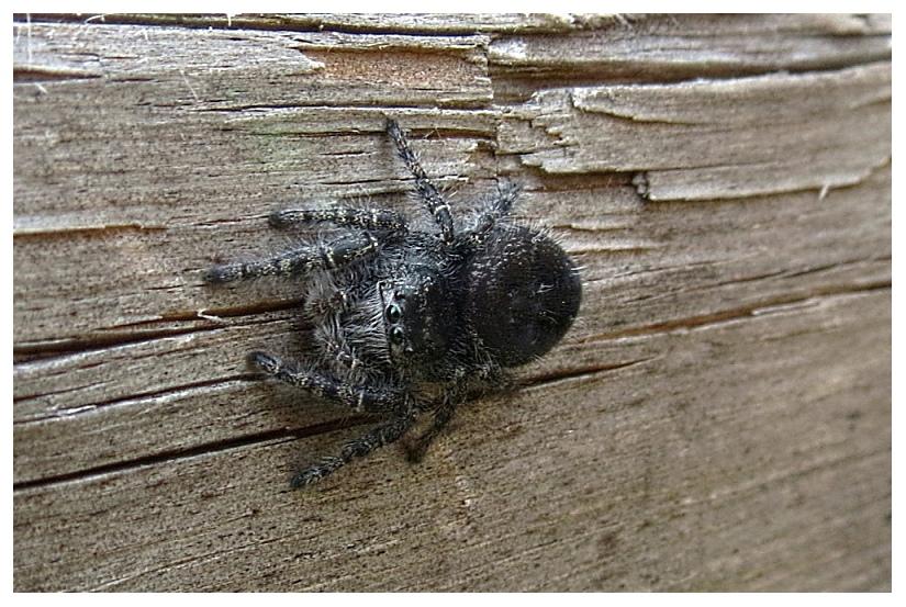 Spider by RueTris