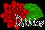 dahlia_by_midnightsunscribbler-dbxxrxg.png
