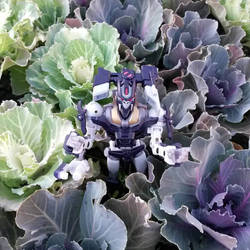 Who was found in cabbage?