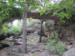 The Bridge of Natural Bridge Caverns