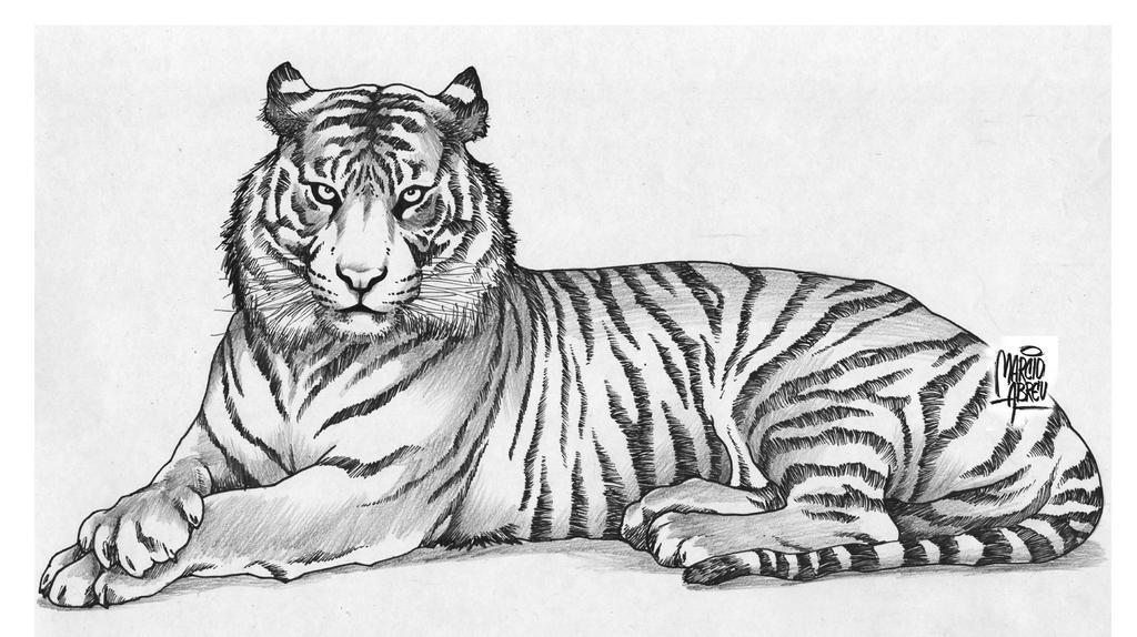 Tiger by MARCIOABREU7