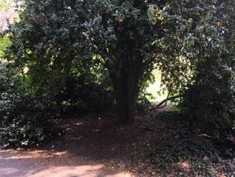Little window between trees