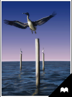 Pelicans by JonNunez
