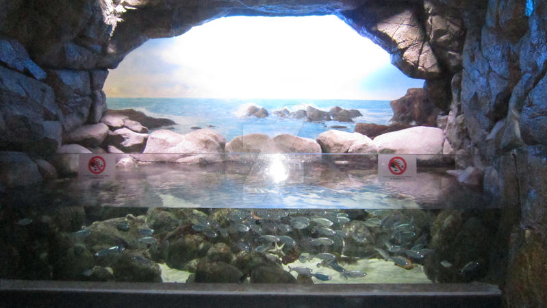 Image Result For Sea Aquarium Sentosa